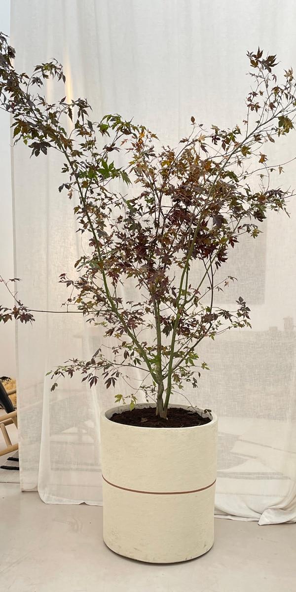 Subtile Plant